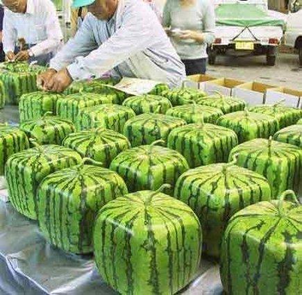 435_squarewatermelon2